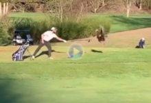 Este aficionado se vio sorprendido por el ataque de un ¡¡pavo!! mientras jugaba al golf en el campo