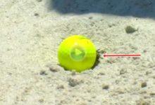 Bubba protagonizó una rara situación de reglas al quedarse un cangrejo debajo de la bola en bunker