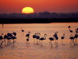 Andalucía, paraíso de Parques Naturales: desde Doñana, pasando por Cazorla hasta Sierra Nevada