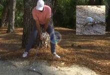 ¿Suerte del campeón? Cink sacó un birdie increíble con la bola en una rama y un complicado stance