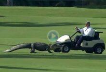 El PGA tendrá a unos espectadores muy especiales esta semana: los cocodrilos que habitan en el lugar